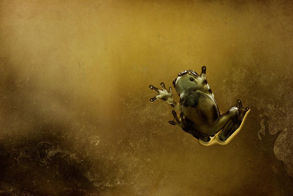 Amphibien / Amphibians