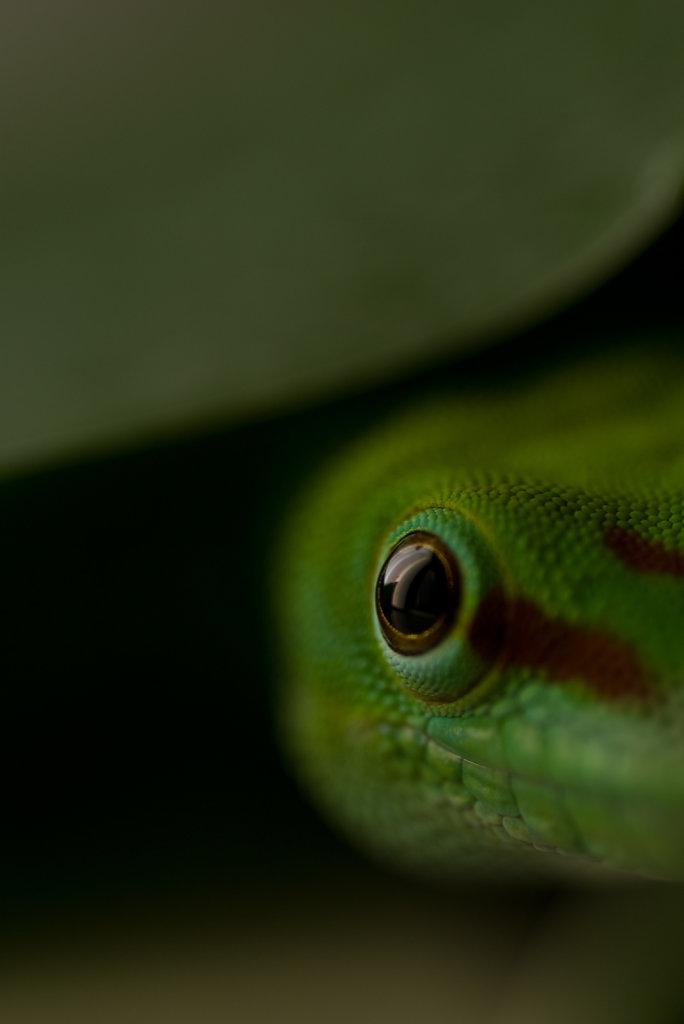 Reptilien / Reptils