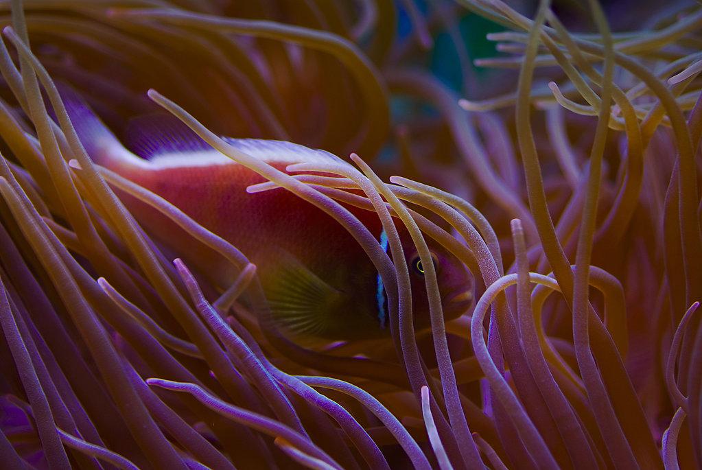 Unterwasser / Underwater