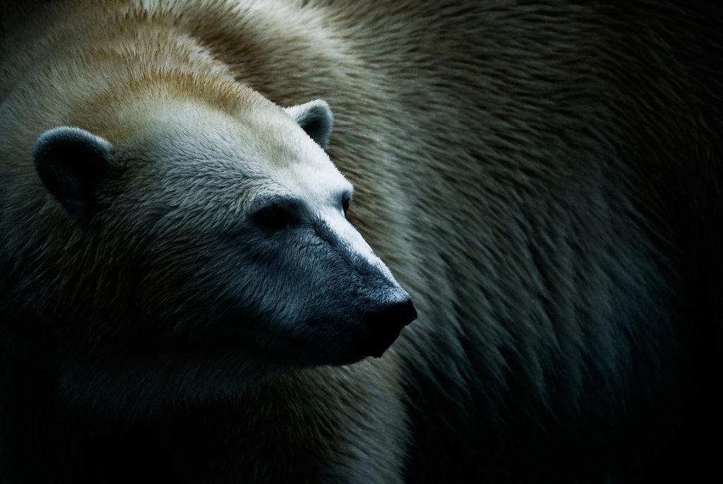 Andere Säugetiere / Other Mammals